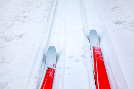 Cross-country skis in winter landscape