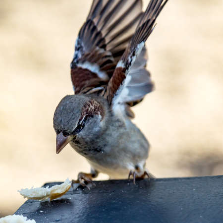 Sparrow in natural environment Stock Photo