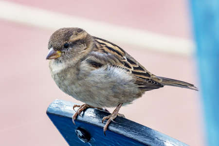 Sparrow in close-up Stock Photo