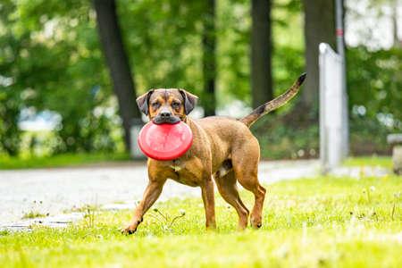 Big dog retrieves an object Foto de archivo - 125613029