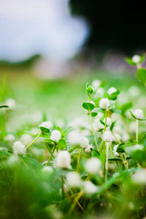 the flower grass ,background Stock Photo
