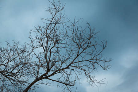 the  dry branch tree with dark clound background