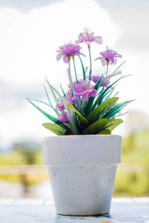 the flower in a flower pot on an white table with background
