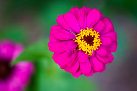the background, flower garden