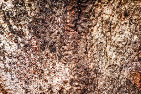 the Bark of Old Wood Tree Texture Background Pattern Banco de Imagens