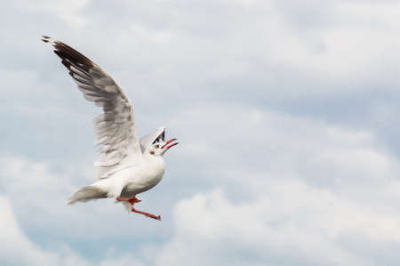 Seagulls flying gracefully on the sky