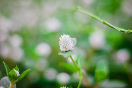 the flower grass ,background Banco de Imagens