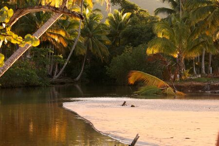 Jungle in caribbean, river and coconut palms photo