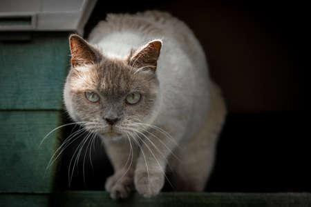 plastico pet: gato doméstico en su jaula en el jardín de una casa Foto de archivo