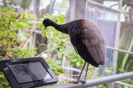 The bird looks at the plate with an inscription in zoo Stock Photo
