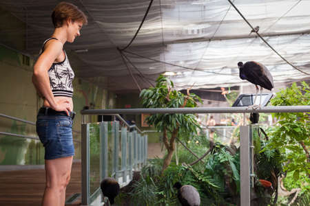 Woman is photographing birds in the zoo with her smartphone Stock Photo