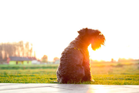 Dog watching sunset on the terrace of the house Stock Photo