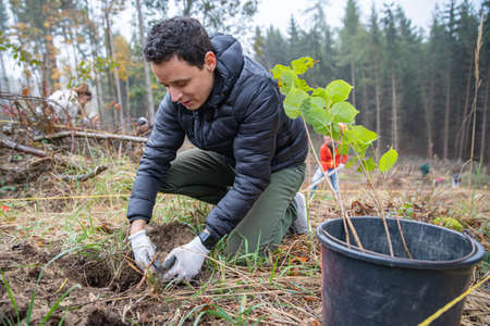 plantation of young trees for forest regeneration after intervention by natural elements