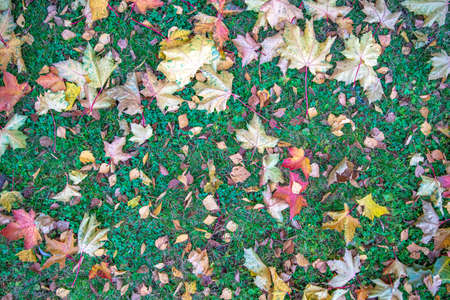 dry yellow and red leaves on green grass in autumn