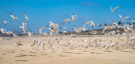 A flock of seagull on the ocean coast