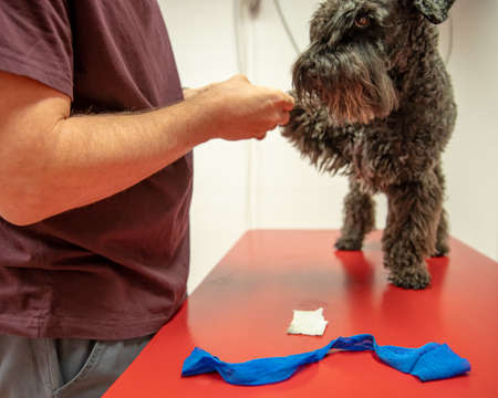 Dog on the table for examination paws in veterinary surgery. Imagens