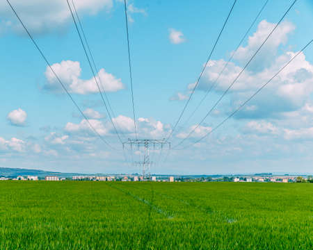 high voltage wires over a field with farm plants Imagens