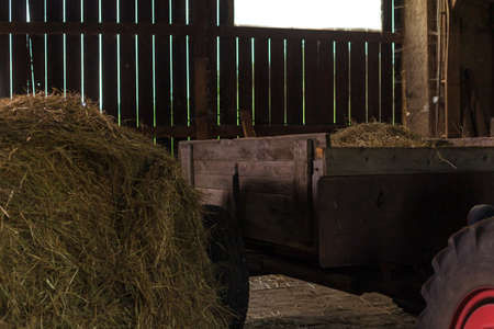 preparation of hay for cattle feeding in the barn