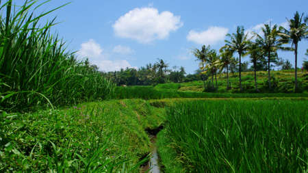 water canal irrigation system on rice paddy field photo