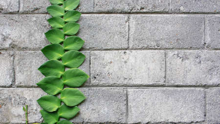 creeping plant: creeping plant at concrete brick Stock Photo