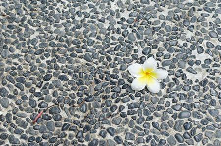 pebble: frangipani on pebble floor