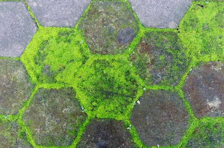 mossy: mossy hexagonal pavement block Stock Photo