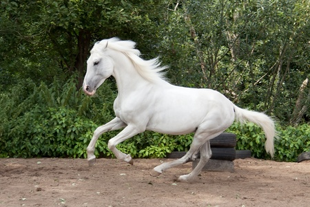 Mooie Orlov draver genoemd