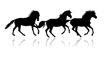 Silhouettes of three running horses over white