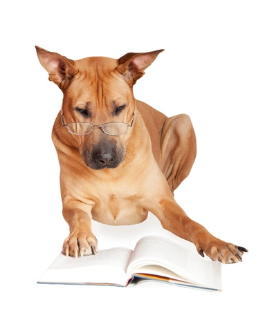 Dog in glasses reads book. Isolated over white.