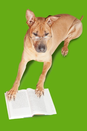 Dog in glasses with book. Isolated over green background.  photo