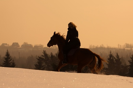 hooves: Girl riding Russian Don horse at sunset
