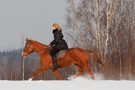 Girl riding Russian Don horse at winter day photo