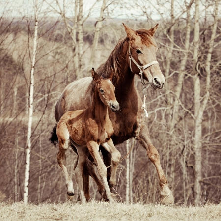 Foal with his mother in the meadow