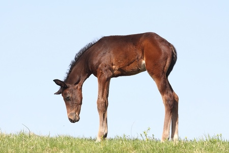 stares: Little foal stares at a flying fly Stock Photo