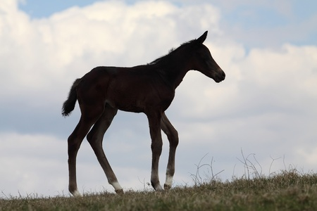 Silhouette of little foal against sky photo