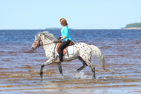 Girl rides a horse of Altai breed in the Gulf of Finland photo
