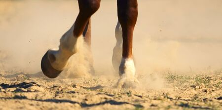 hoof: The hooves of horse running through a dusty field