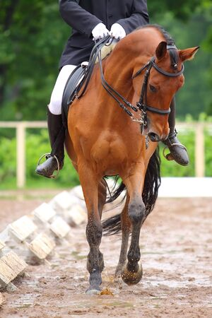 Horse dressage show in bad weather photo