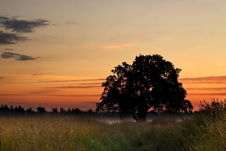 Summer dawn over the meadow  photo