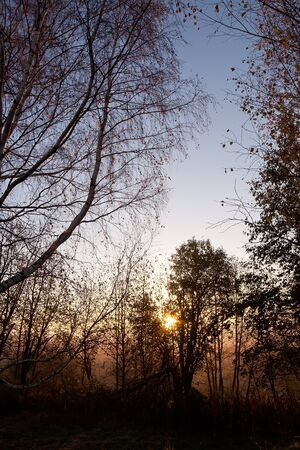 northern nature: Northern nature, sunrise in a forest