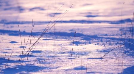 snowdrift: Grass in the snowdrift