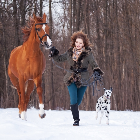Beautiful young woman with a dalmatian dog and a horse of Don breed photo