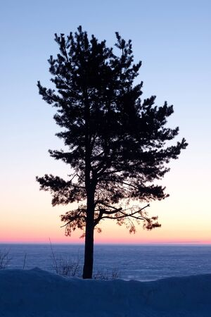 Lonely tree on the lake at dawn in early spring photo
