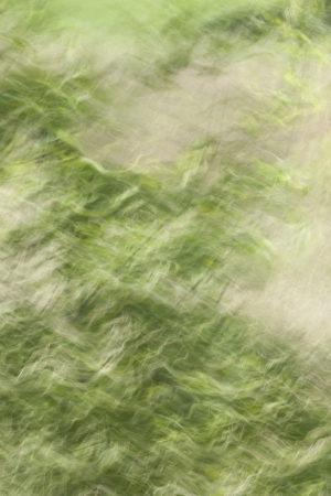 shutter speed: Slow shutter speed on green grass to give a movement effect Stock Photo