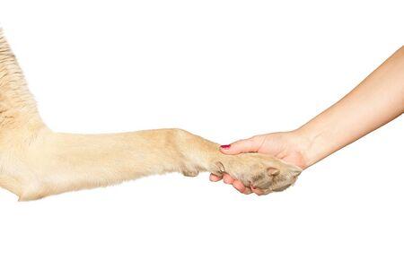humanism: La pata del perro y de la mano femenina haciendo apret�n de manos. Aislado sobre fondo blanco.