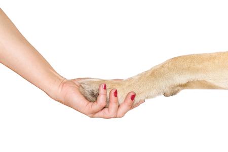 humanisme: patte de chien et poign�e de main fait main de femme isol� sur fond blanc