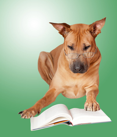 Red dog in glasses read book. Green backgound. photo