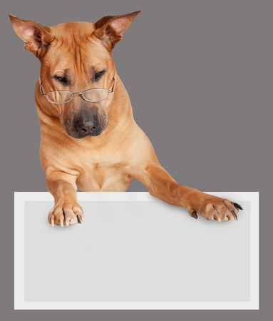 Dog in glasses holding an empty placard photo