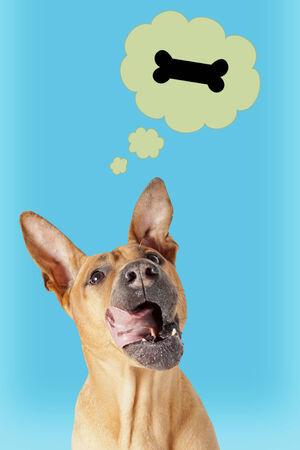 foretaste: Funny mongrel dog dreaming about a bone