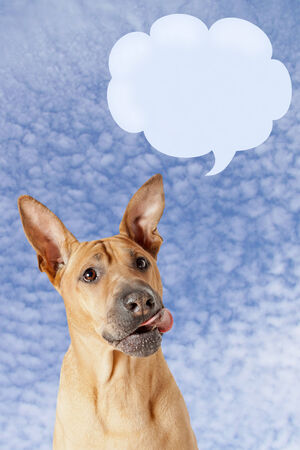 smack: Cute mongrel dog with speech bubble against blue sky